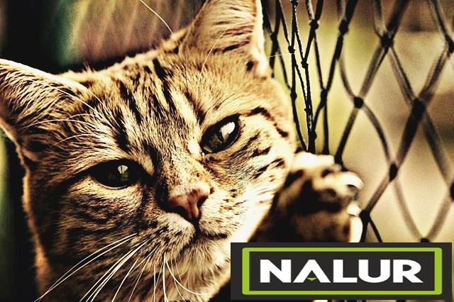 Polipropylenowe siatki ochronne dla kotów