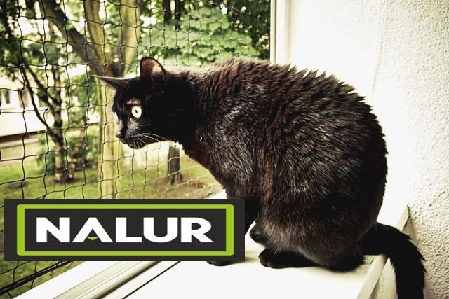 Siatki ochronne na okna dla kotów