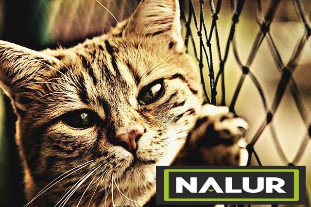 Siatki ochronne dla zwierząt domowych